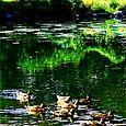 Wampus Creek