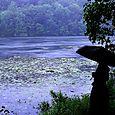 Rainy Wampus Pond