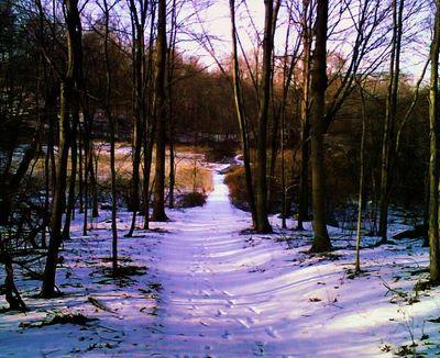 Snowy_path